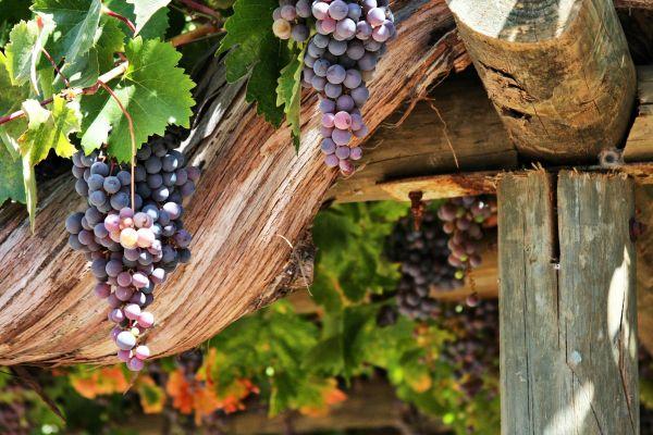 Növekedhet az európai borágazat