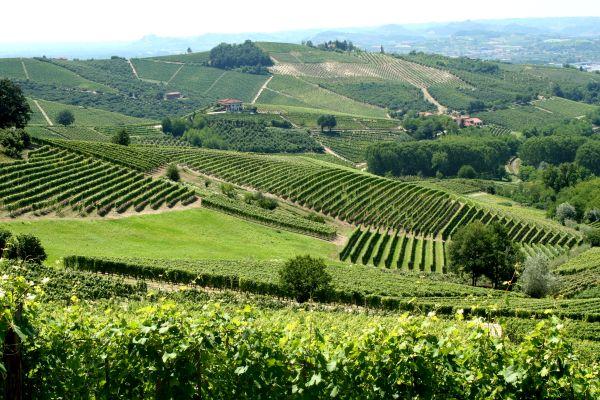 Olaszország továbbra is a legnagyobb bortermelő