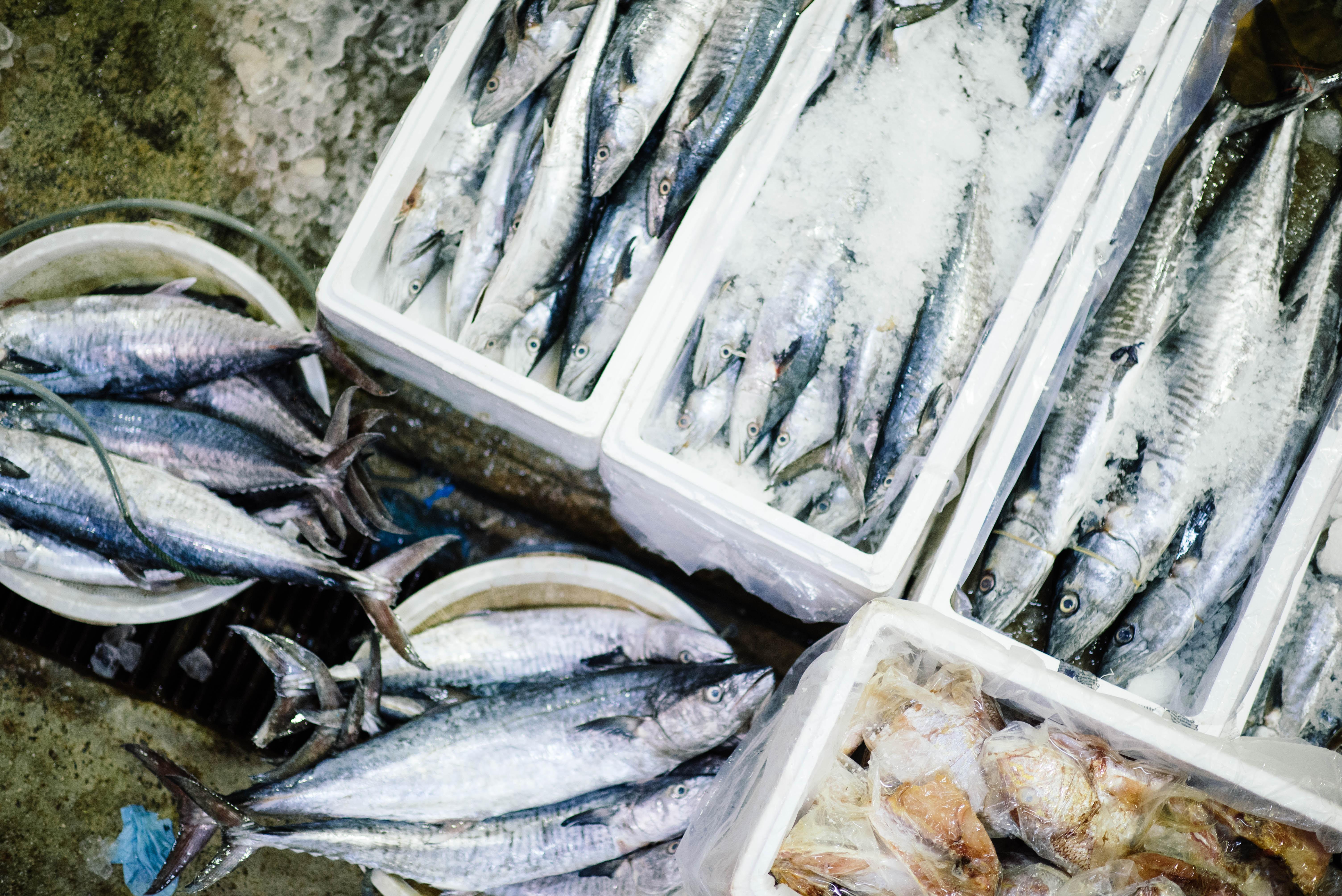 A fenntartható tengeri halakért – Olivier Roellinger versenykiírás