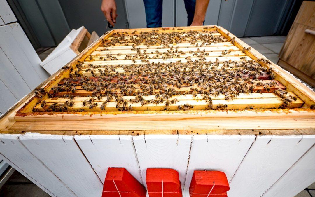 Méhészet az ABB-nél az adatelemzés szolgálatában