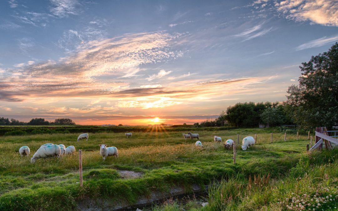 Mindent a juhokról
