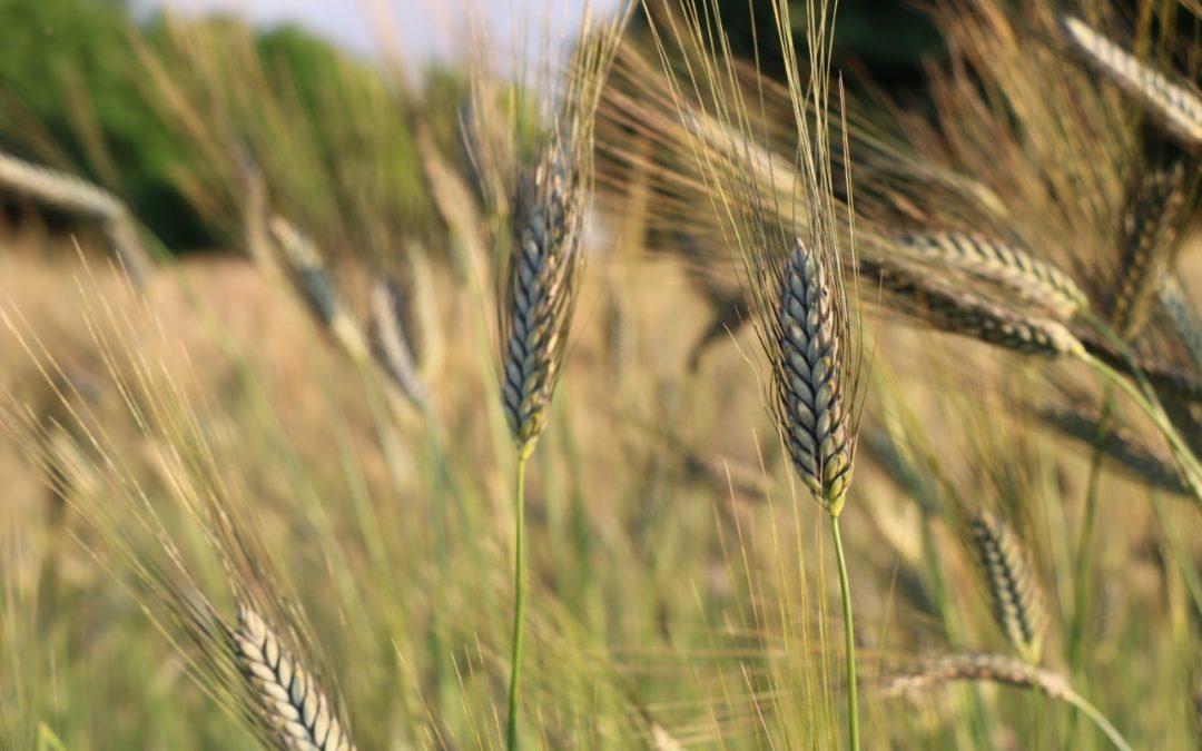 A cél a jövőálló agrárium
