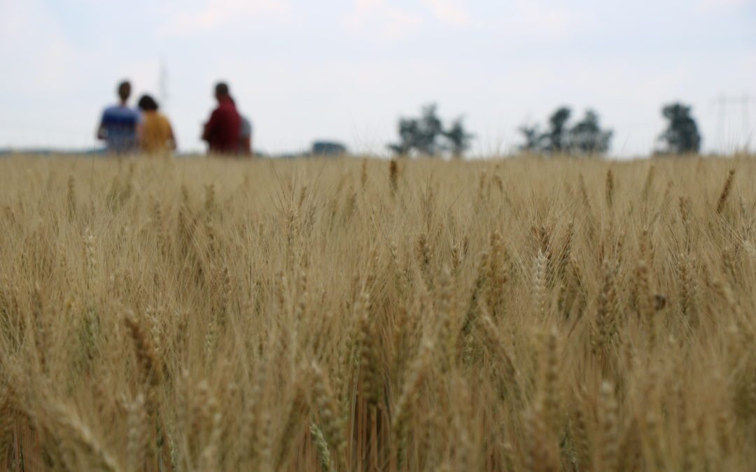 Ökológiai gazdálkodás: Magyarország a világ legdinamikusabban fejlődő országai között