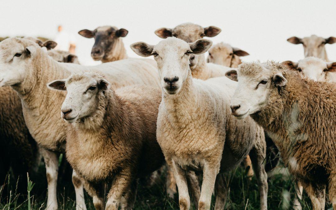 Idén duplán örülhetünk a Bárány Napoknak!