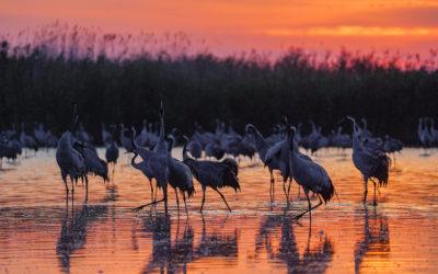 Magyarország vár – Vándorló vízimadarak nyomában